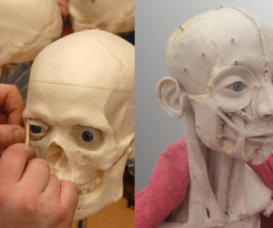 Two days of advanced  Facial Anatomy  Wax Modelling Workshops