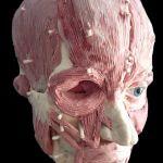 3D facial reconstruction sculpture by Louise Hinman