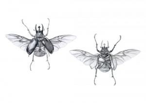 Insect illustration by Ellen Lever