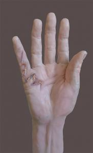 Wax hand model, colour added in photoshop by Louise HInman