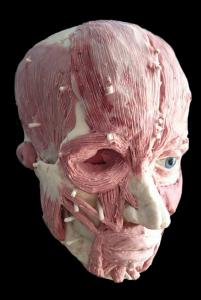 3D facial reconstruction sculpture by Louise Hinman