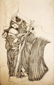 anatomical dissection in pen and ink by Billy Leung