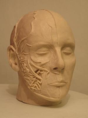 head-2