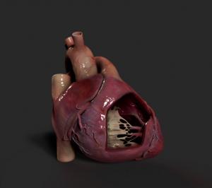 heart-1024x910