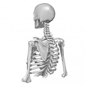 skeleton-1024x1024